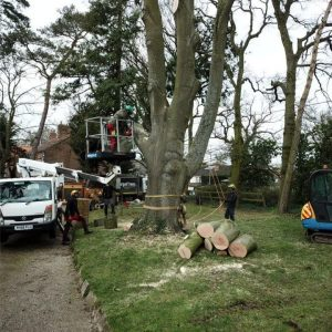 What is a tree surgeon Norwich