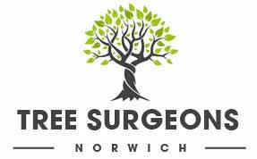 Tree Surgeons Norwich